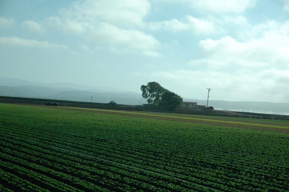 salinas-crops