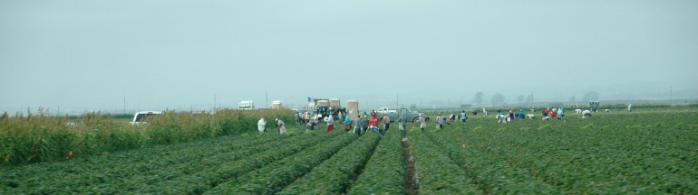 salinas-pickers